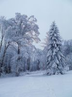 real winter by czmartin