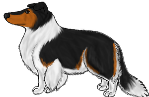 Rough Collie: Tri-color by Colliequest