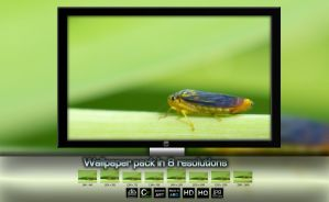 Wallpaper insects by ipawluk