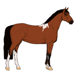 Bay Tobiano SOLD by Zacy-Rev-Shadows