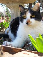 Calico In The Flowers01 by effing-stock