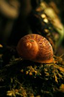 Shell by Armathor-Stock