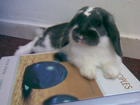 The Bunny Who Reads Chemistry by dievegge