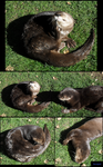 Otters by racingwolf