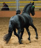 STOCK - 2014 Andalusian Nationals-219 by fillyrox
