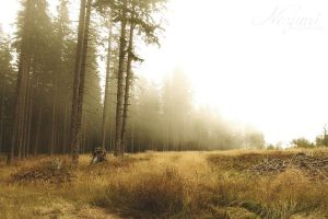 Fog in the woods 1 by nezumi-photography
