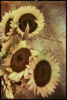 Sunflowers by johnmallon7