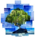 Tree Montage by Evil-Wench