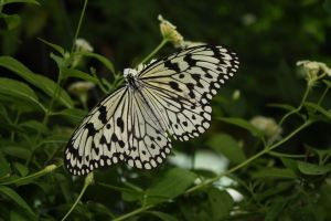 Toronto Zoo's Butterflys 2 by wiltedwalflower