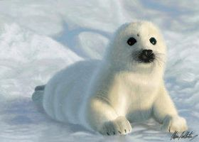 Willie the Seal Pup by Animal-Lovers-Unite