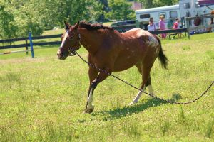 Freckles the Appaloosa by Kristy-Kitty
