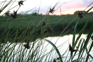 See Through The Swaying Reeds by Kaptured-by-Kirsty