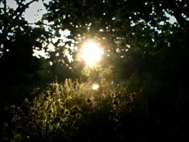 It wasn't only a dream. by zlati98