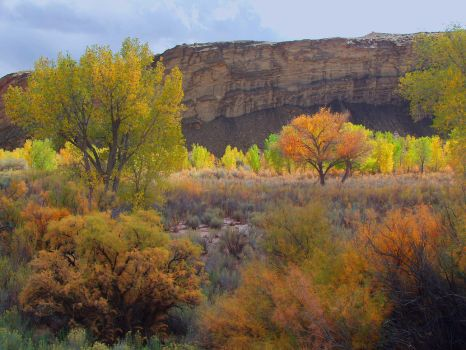 Fall colors by NB-Photo