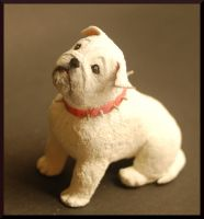 Miniature bulldog by MiniatureChef