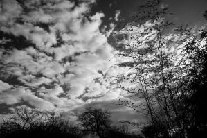 Sky, clouds, bush.. by Jon4H