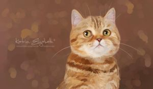 Scottish Straight Cat by Katrin-Elizabeth