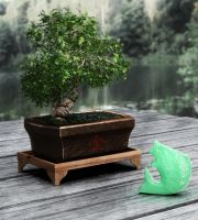 Bonsai and Jade by WormDog1