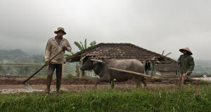 Domesticating the wild buffalo by SantiBilly
