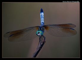 Green Darner 07-1 by boron