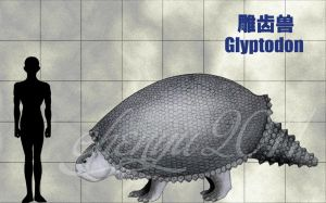 Glyptodon by sinammonite