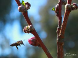 Wasp and new buds of spring by Bluebuterfly72
