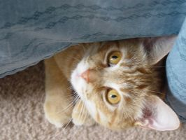 Peek A Boo by lucytherescuedcat