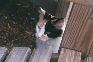 Calico by ThatzThatz