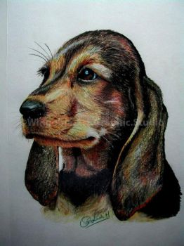 Basset Hound Puppy by WingobiaArtGraphic