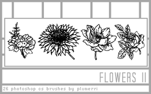 26 Flowers II Dingbat Brushes by plumerri