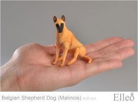 Malinois 05 by leo3dmodels