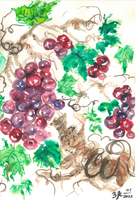 GRAPES OF THIS SEASON by impalabee