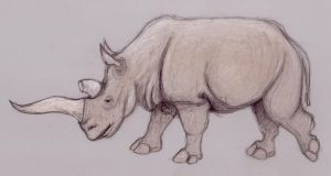 White Rhino sketch on Dura-Lar by tursiart