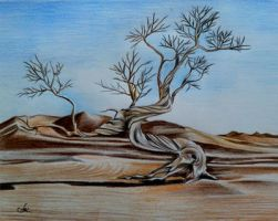 The Wise Desert Tree by annakoutsidou