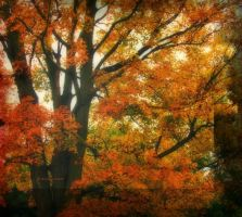 Autumn Shaded Leaves by Anj3lla