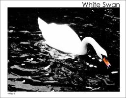 White Swan by WKLIZE