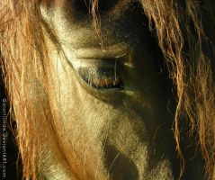 horse close-up by Galorfilinde