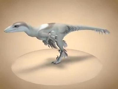 Troodon preview render by Paperiapina