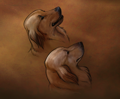 The Chan Dogs by gothic180