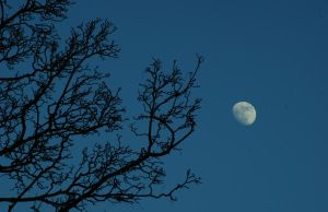 Moon and branches by MatthewRory
