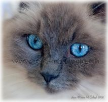 turquoize eyes by substar