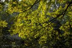A natural green filter by TLO-Photography