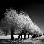 Spring Trees b+w infrared by MichiLauke