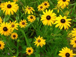 Everywhere Yellows by Rounette