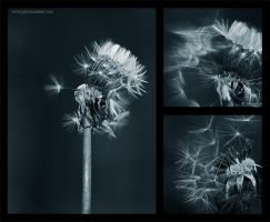 Make a Wish II by PaytonAdams1