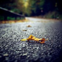 .Another street's victim by tgphotographer