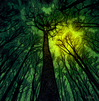 The Haunted Forest by hallbe