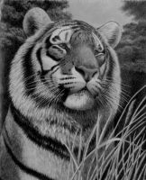 Silent Surveillance, pencil by Panthera11