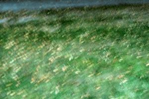 Abstract Grass 01 by Sofedar