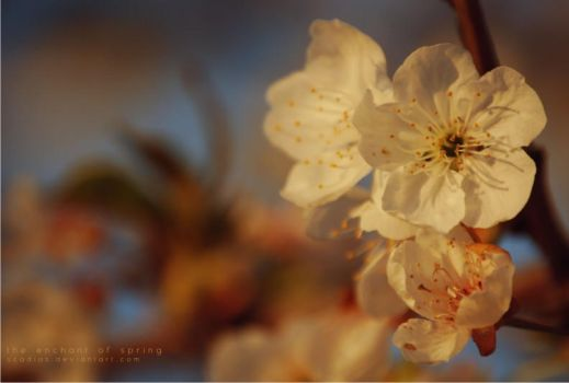 The enchant of spring by scadias